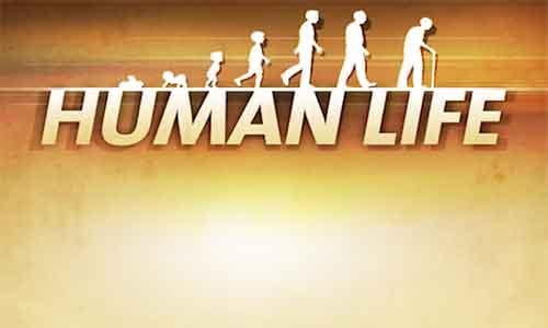 human-life-cheats